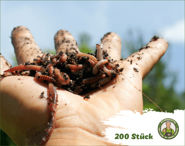 Angelwürmer 200 Stück - Angelköder Lebendköder Futterwürmer Kompstwürmer kaufen | WurmMeister